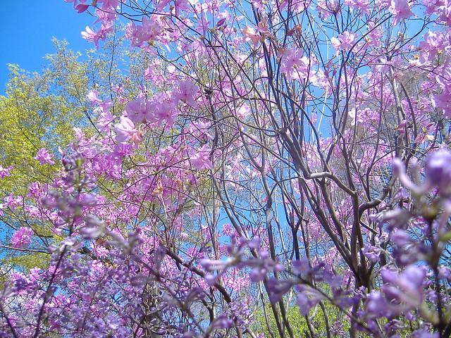 Tenryuu-ji garden 7