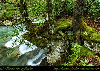 Back Fork of Elk River