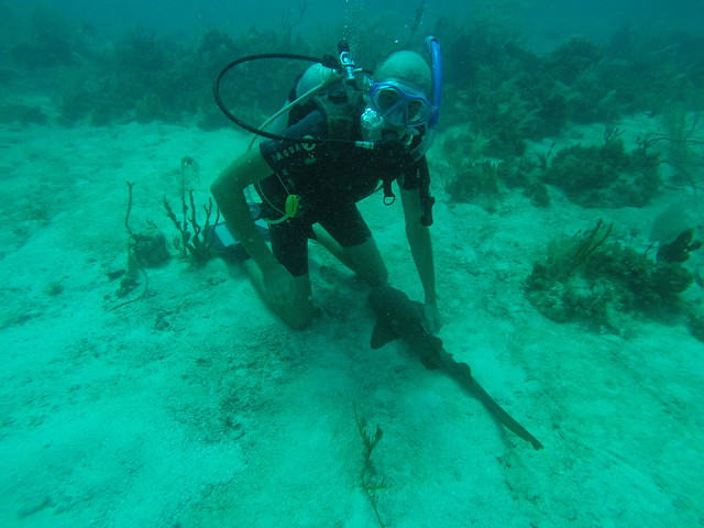 Petting a nurseshark