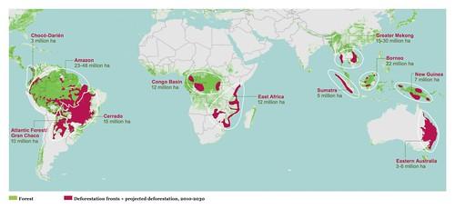 全球森林砍伐地圖。(來源:WWF)