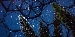 snow-rainforest-palm