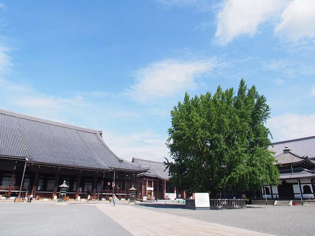 西本願寺-元氣玉銀杏樹