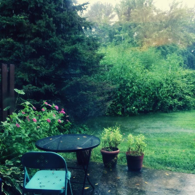 Rain, Rain, Rain #rain #rainyday #weather #patiogarden