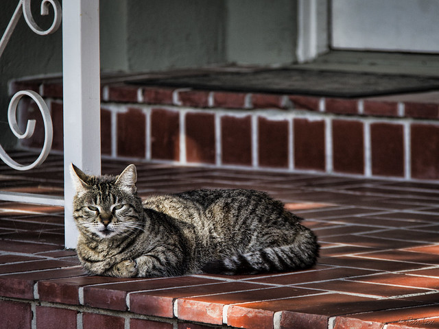 Porch cat