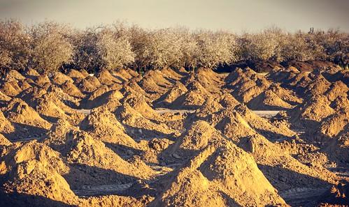 trees sunset golden raw earth bloom hdr goldenhour piles 3xp photomatix fav100 almondtrees nex6 sel55210 selp1650