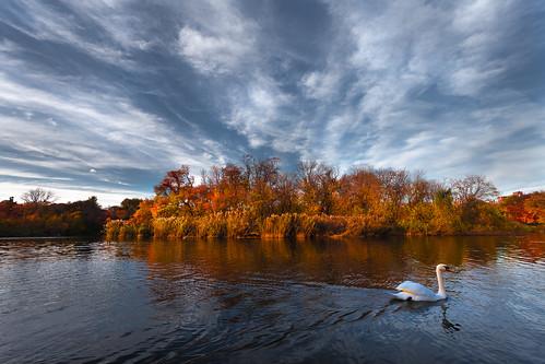 autumn sunset sky cloud lake newyork brooklyn swan prospectpark urbanpark
