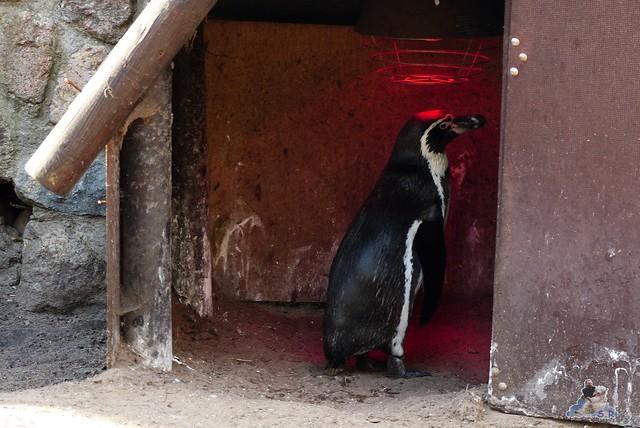 Zoo Eberswalde 22.03.2015   331