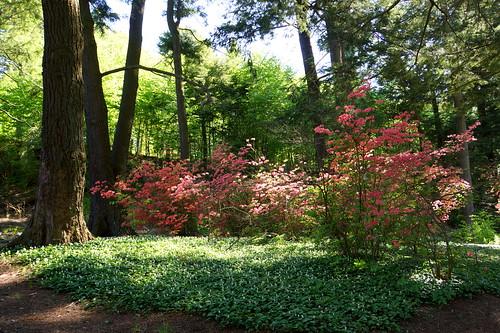 Arnold Arboretum, Boston