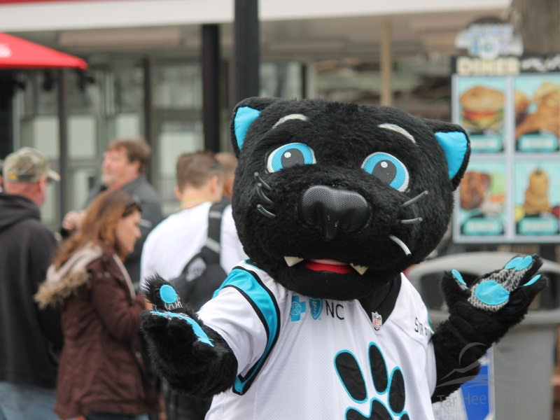 Fury 325 Opening - Sir Purr
