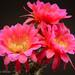 (#92) Blooming Desert