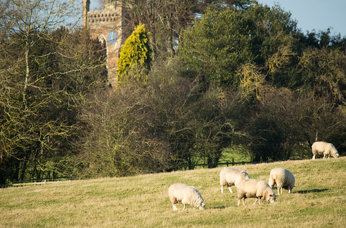 20141231-51_Sheep + All Saints' Church - Braunston - Cathedral of the Canals