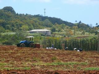 P3270019-Redland sugar Plantation