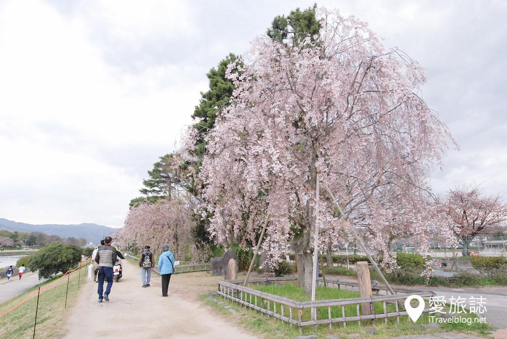 京都赏樱景点 半木之道 03