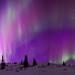 The Elusive Purple Aurora by Ben  H.
