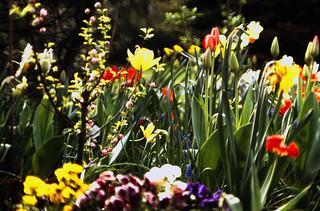 01 Frühlingsgarten