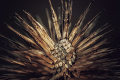 spikes up close