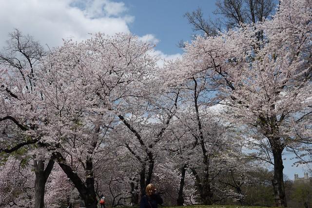 火, 2015-04-21 12:50 - Central Park