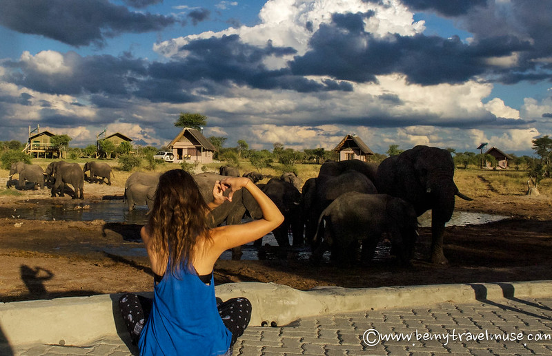 best wildlife viewing in botswana