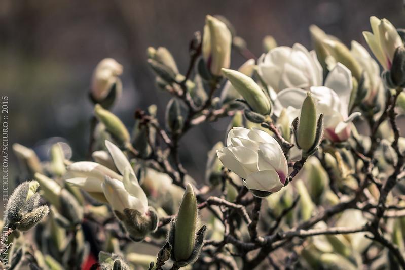 spring2015-3779