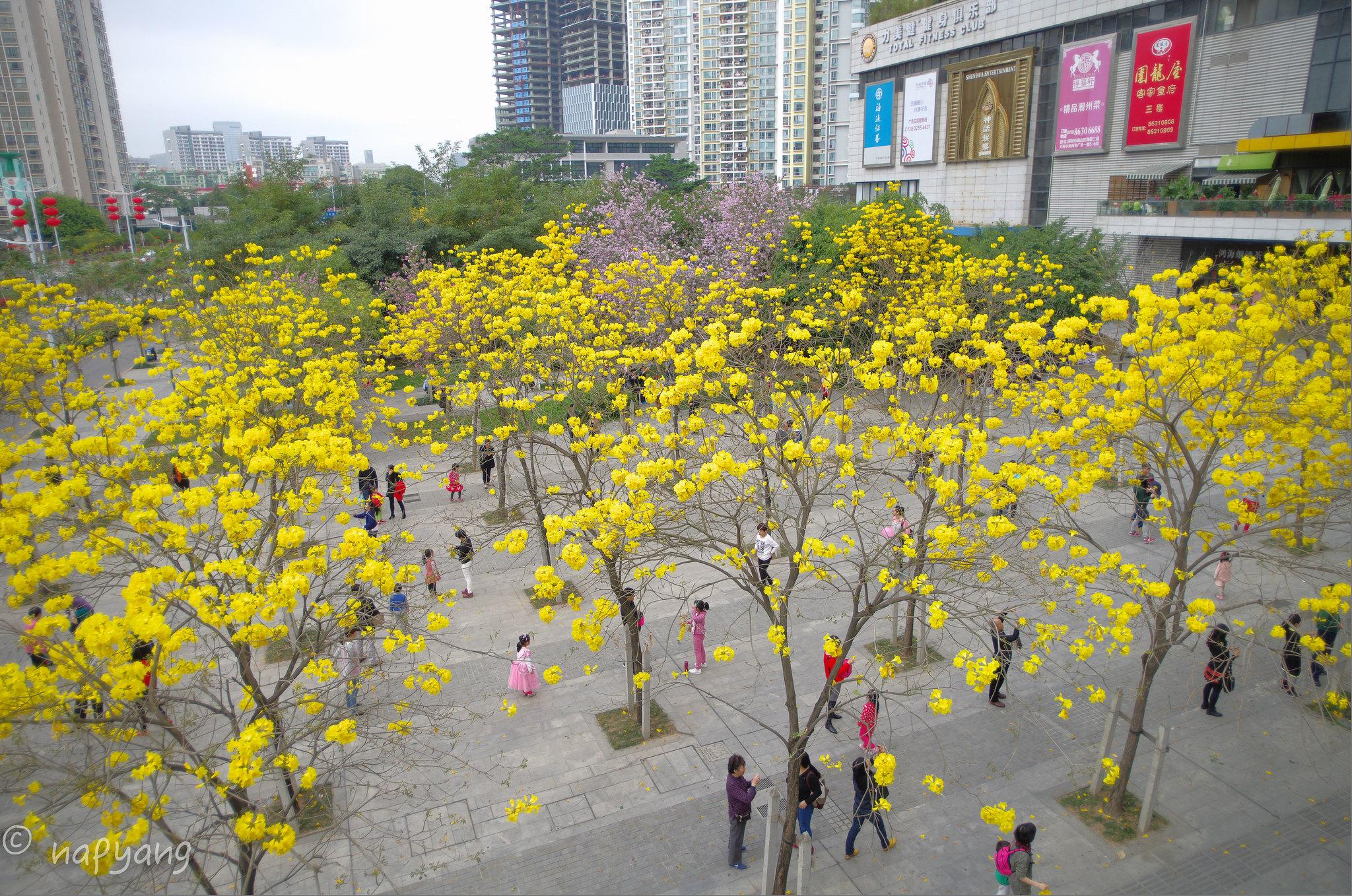 春暖花開婦女節