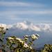 Blurred Peak