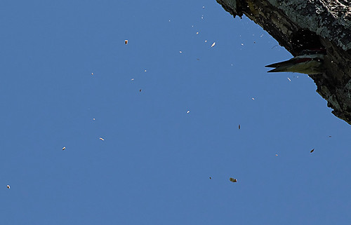 piwo-f-sawgrasslakepark-3-17-15-tl-1-cropscreen