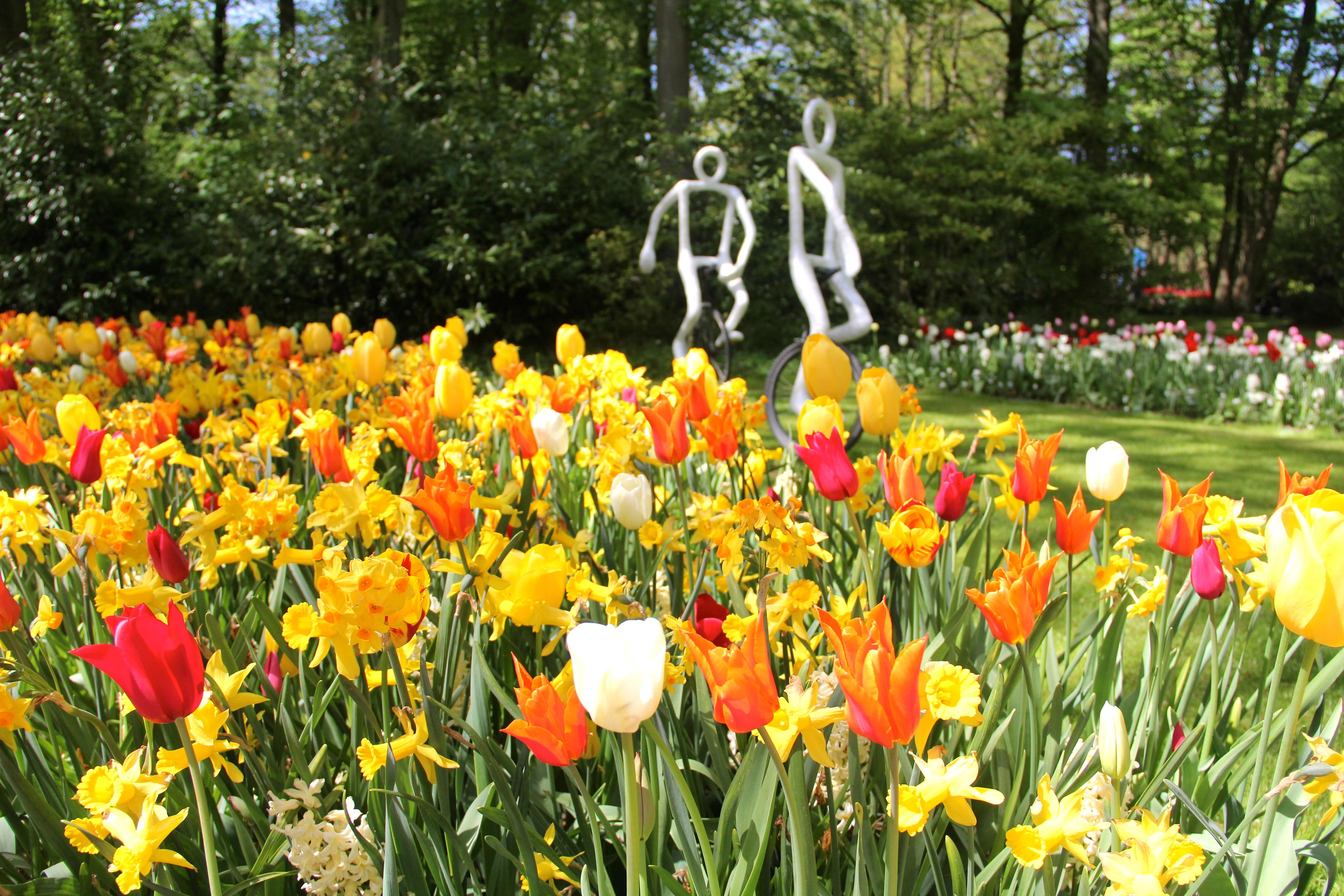 Keukenhof o maior jardim de tulipas do mundo fica na for O jardins d eglantine