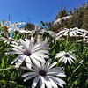Primavera total #flores #flowers #igersspain #iphone6 #azul #sky #igersmalaga #Snapseed