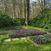 Purple crocus + tulip greens:four_leaf_clover: