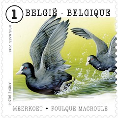 05 ANIMAUX timbre E foulque macroule