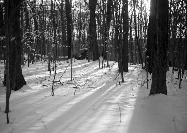 Tree Shadows II