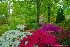 Exbury Garden (4)
