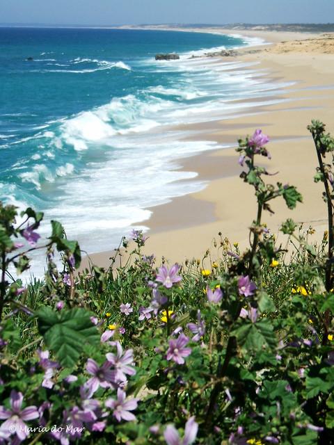 Mergulho Floral, 2014, Fujifilm FinePix A510