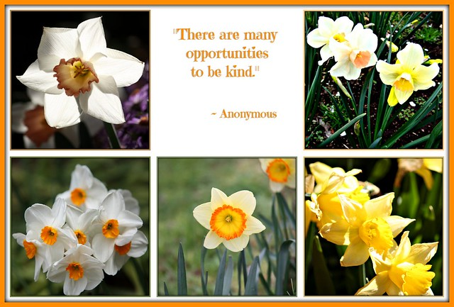 """There are many opportunities to be kind."""