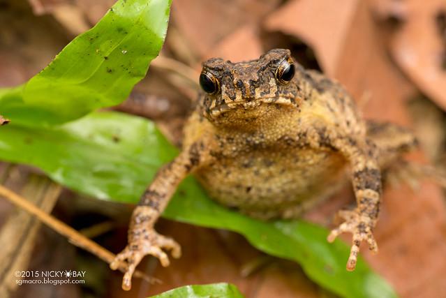 Frog - DSC_5384
