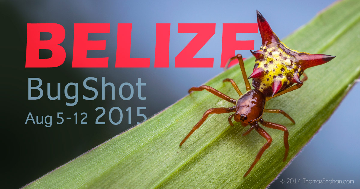 Macro Photography Workshop - BugShot Belize 2015