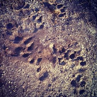 Mud season has begun... ugh #dogpaw #mud #spring #dogstagram #instadog #dogsofinstagram