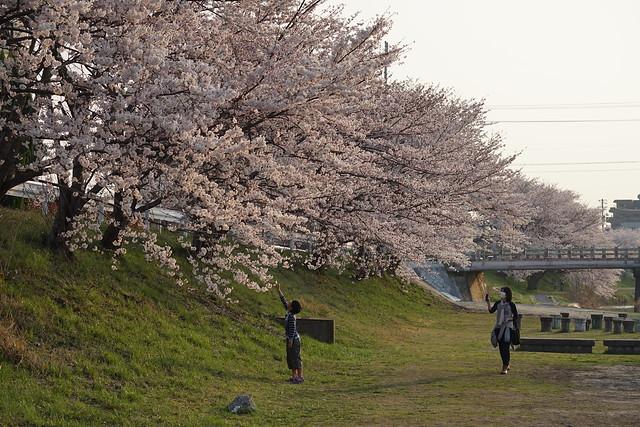 Sakura_05