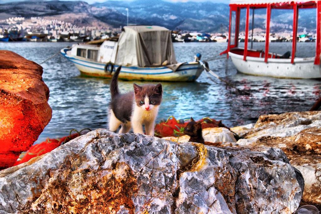 Sea&Cats