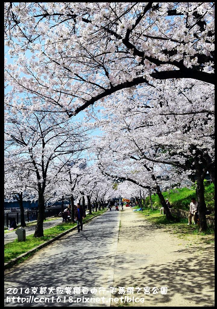 2014京都大阪賞櫻自由行-毛馬櫻之宮公園DSC_2015