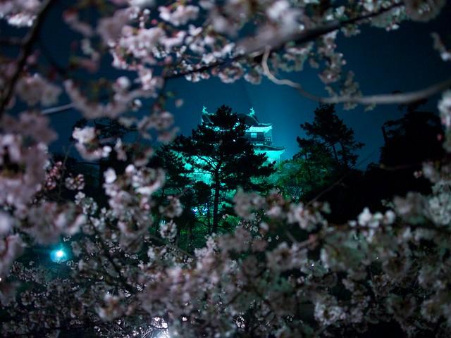 150329_OkazakiNightSakura 3