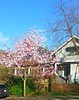 2015 Spring Vancouver