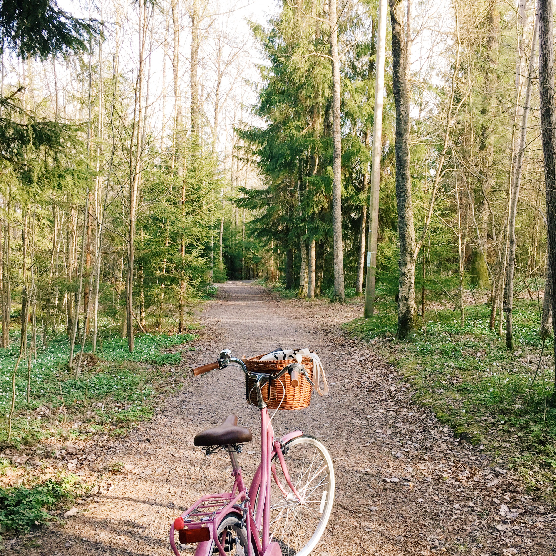 vårens første tur igjennom skogen