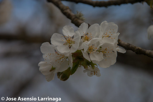 Primavera 2015 #DePaseoConLarri #Flickr -044