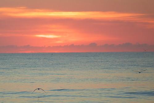 ocean beach sunrise dawn florida seagull