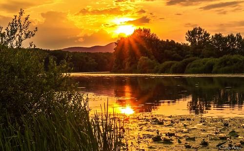 ngc sun sunset travel gold beautyfull nice sony sonyphoto a6300 ilce next bodrog sárospatak zemplén hungary magyar naplemente este gyönyörű sonyflickraward sonyflickrawardgold e 50mm f18 e50mmf18oss