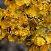 Yellow Lichen by curtisirish