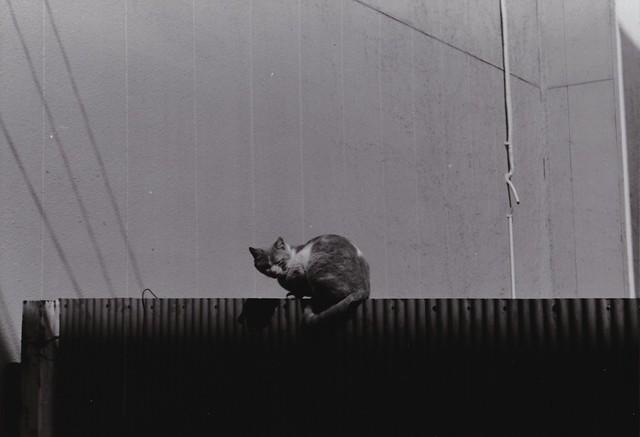 cat,gunma,japan,2015
