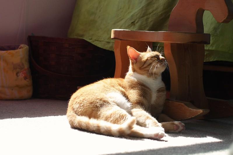 soaking up the sun