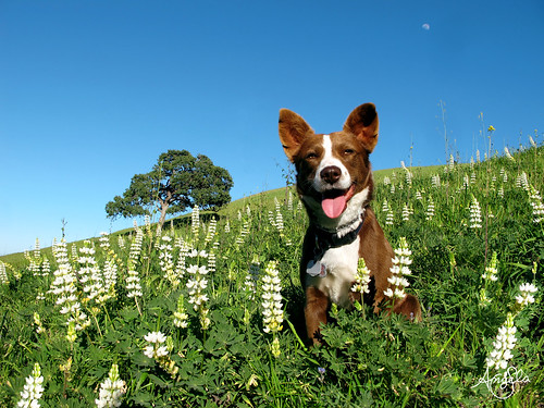 Wildflowers Dog